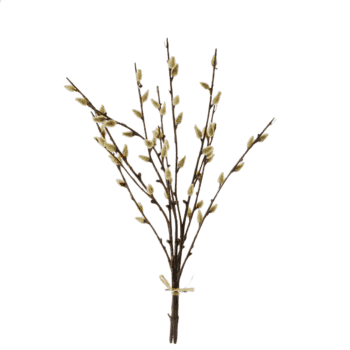 Pussy-willow-bundle-42cm