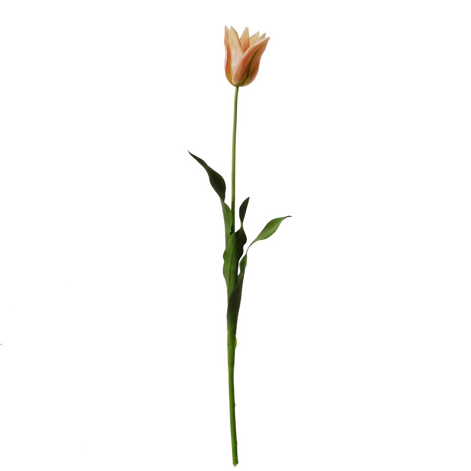 Tulip On A Long Stem Pink Green 74cm Flowerdutchess