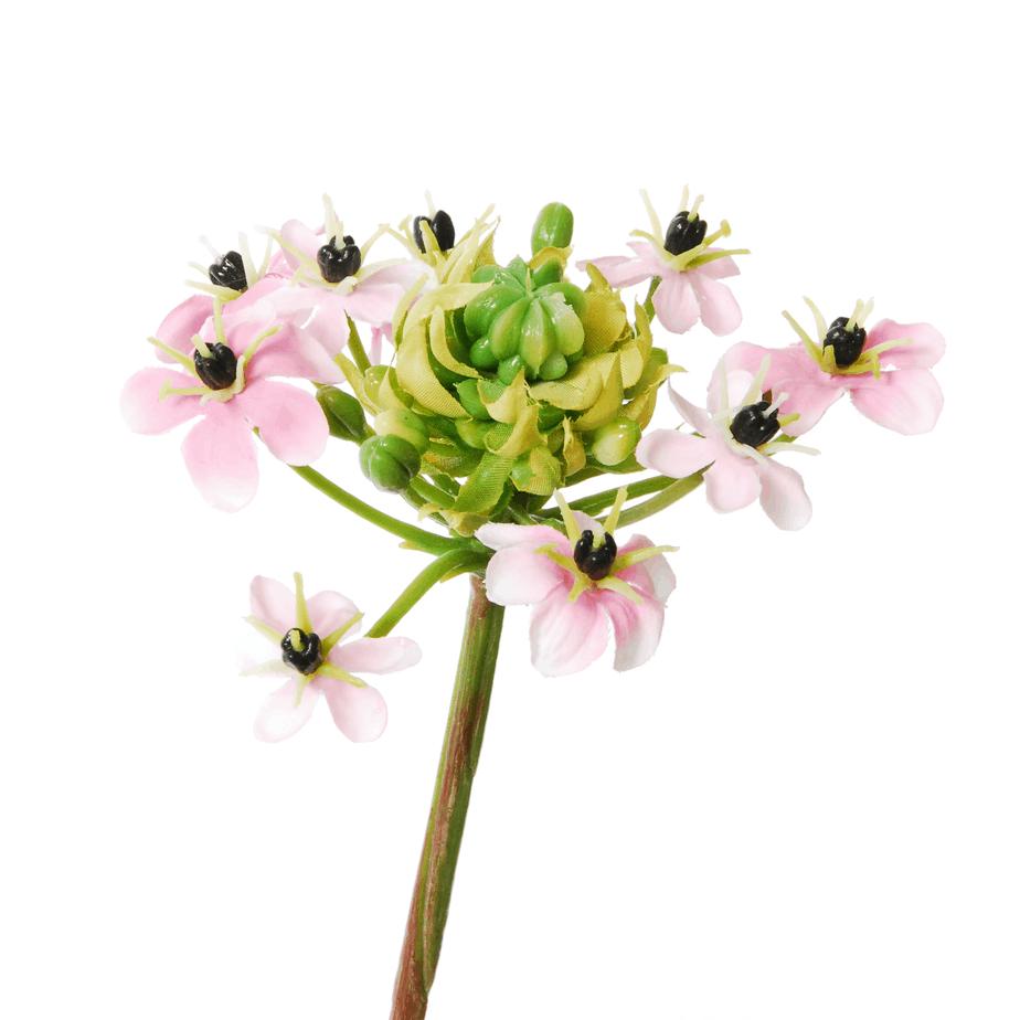 Lieblings Ornithogalum Arabicum | 64 cm | pink | FlowerDutchess.com @AN_24