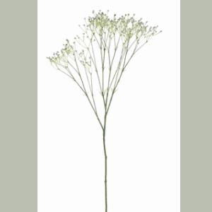 FlowerDutchess-gipskruid